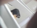 トイレ_teen_お銀さんの「洗面所突入レポート!!」_お銀さんの「洗面所突入レポート!!」_vol.46_スッキリ_盗撮_覗き_中村屋_01